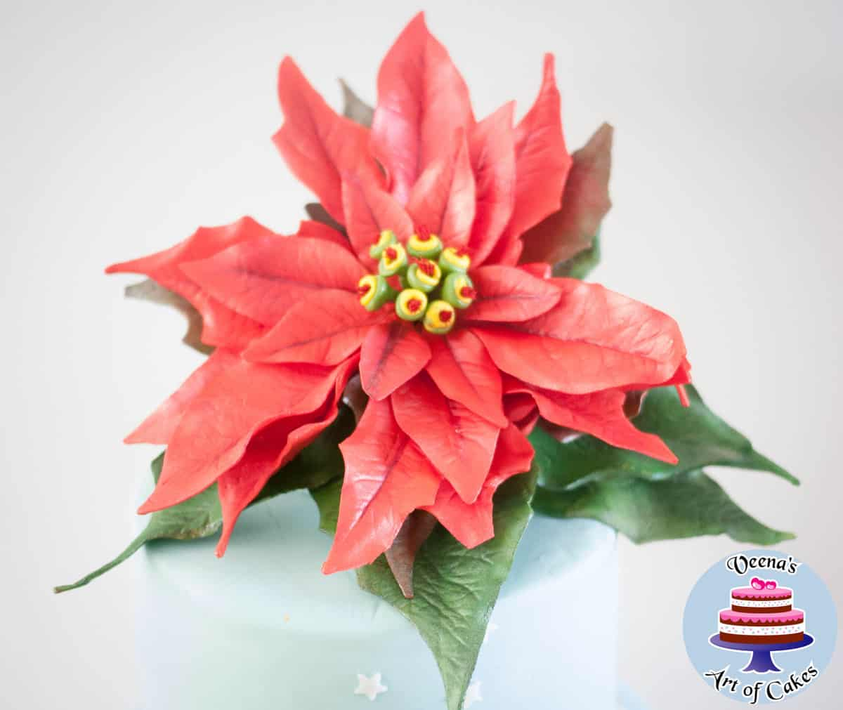 christmas cake with sugar poinsettia veena azmanov