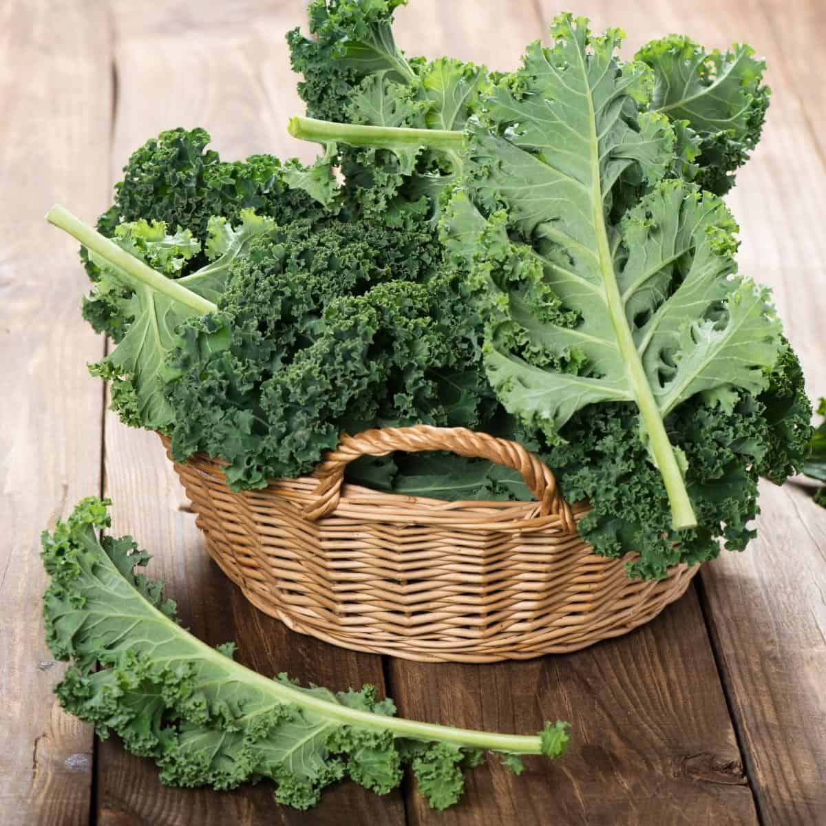 A basket of fresh kale