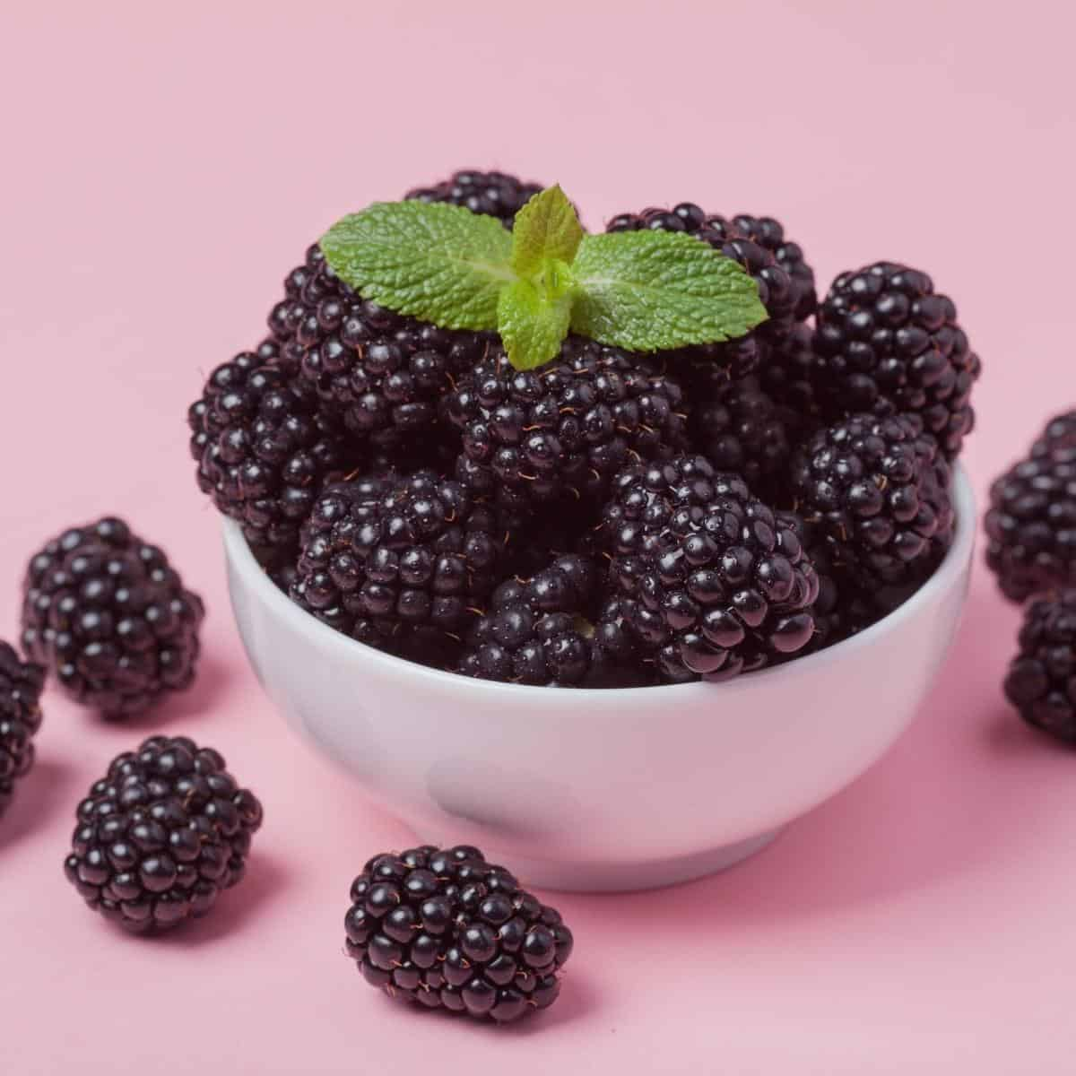 A bowl with blackberries